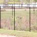 IMG_2507 Florida Panther 2nd shot by davidbbernstein1