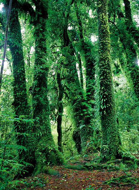 Beautiful Rain Forest | Flickr - Photo Sharing!