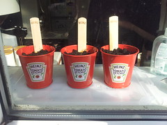 small red plant pots with Heinz tags
