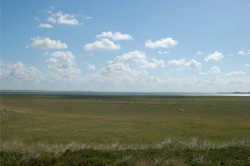 Am Ellenbogen gibt es Marschwiesen auf denen ausgedehnte Schafherden grasen
