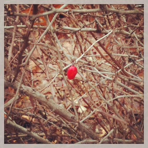 The Lonely Berry