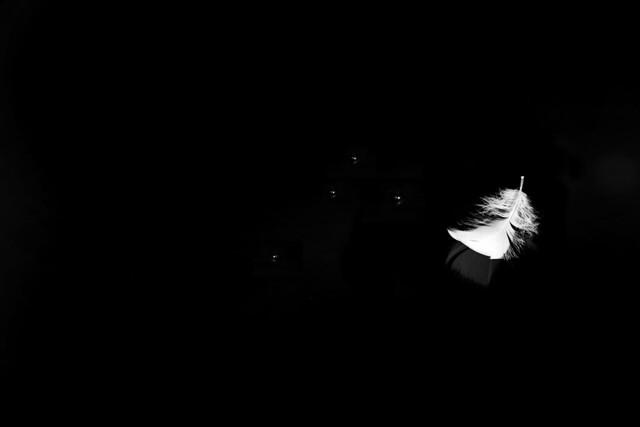 minimalism - feather