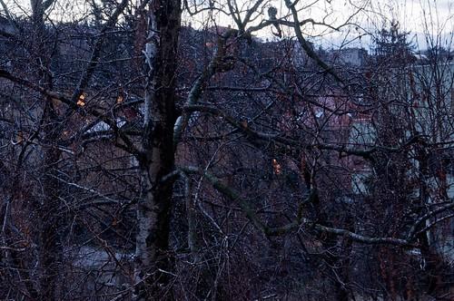 tree rain garden town vrt zagreb grad kiša drvo nikonflickraward