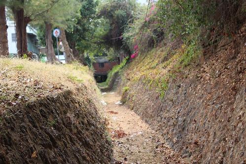 自強新村旁的圳溝,乾淨呈現不同風情。
