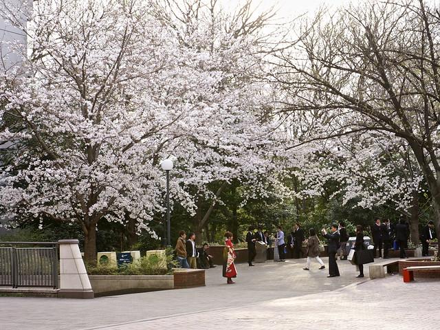 Gakushuin Univ. Sakura