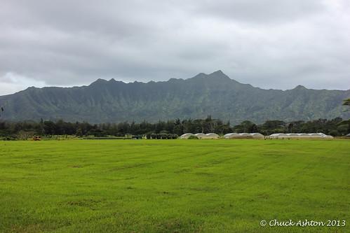 Wai_Koa_Plantation_2013-12