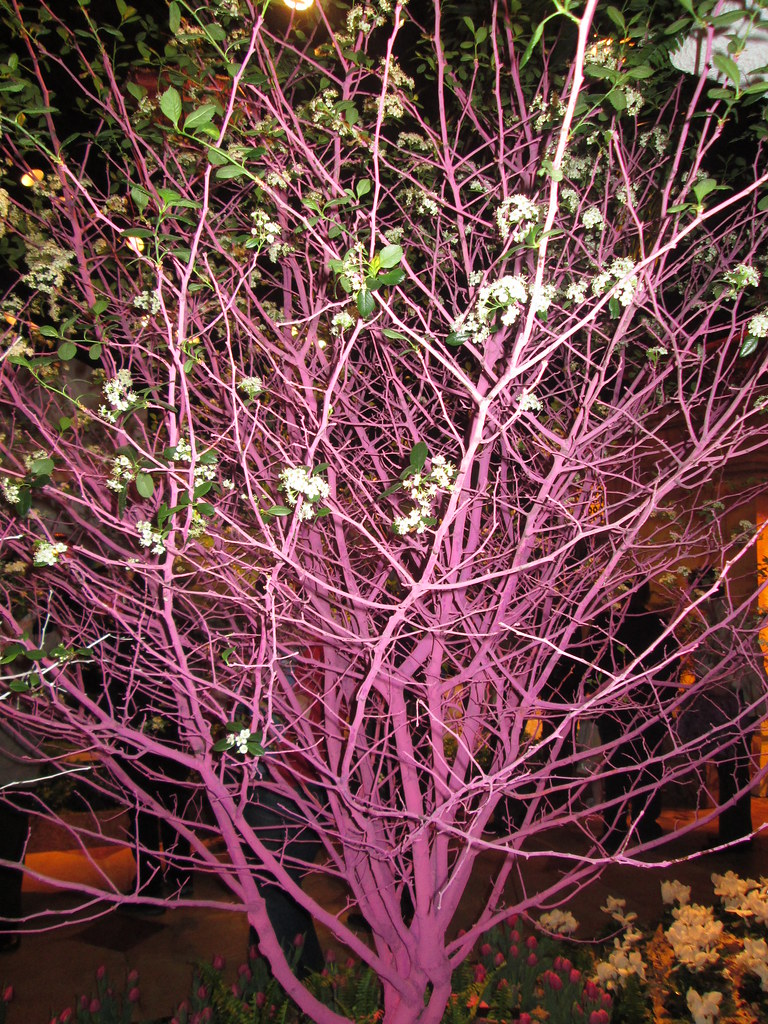 Macy's Minneapolis flower show