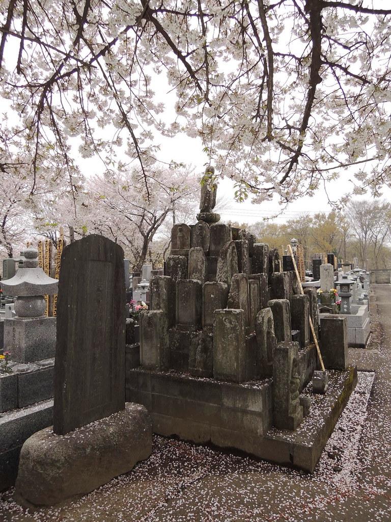 Ishito Kabazakura  石戸蒲桜