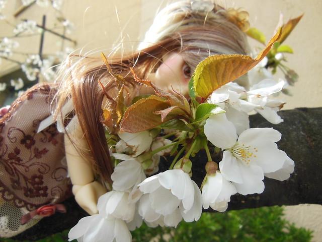 [Toulouse] Résine et fleurs de cerisier 8628536475_911c00740d_z