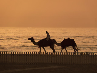 Image of Marina Beach Dubai near Dubai. sunset shadow beach sand dubai camel camels 2013