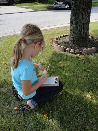 Tree Math Work (Photo from Discovery Days and Montessori Moments)