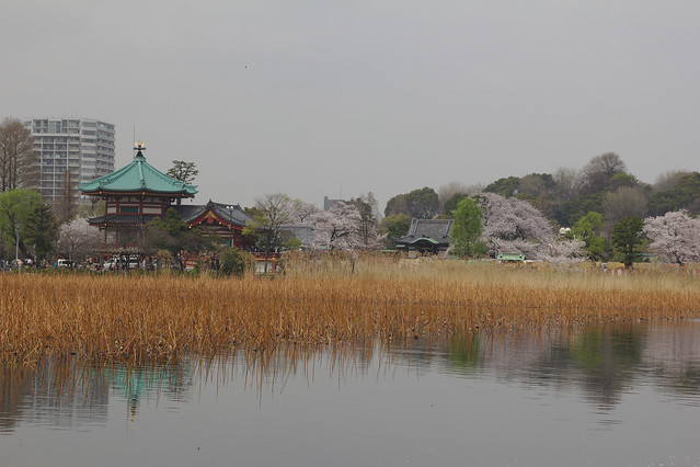 0607 - Ueno Park