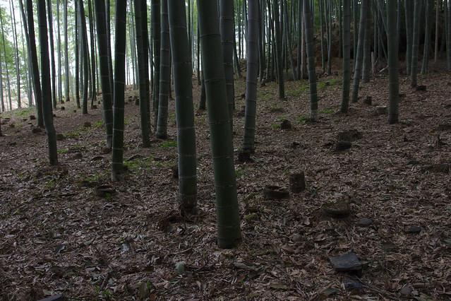 0814 - Arashiyama bosque bambú