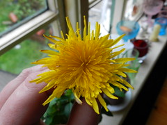 Little Emily gave me a dandelion =)