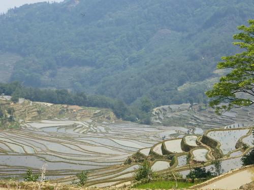 Yunnan13-Yuanyang 14 (7)