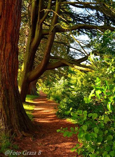 park trees color grass landscape nikon ngc newport tredegar gren d5200
