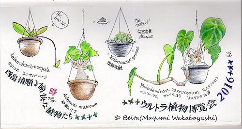 2016_08_27_plantshunter_02_s