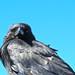 Darth Crow by morroelsie