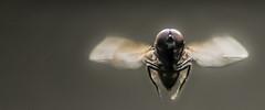 HolderHouse fly flying