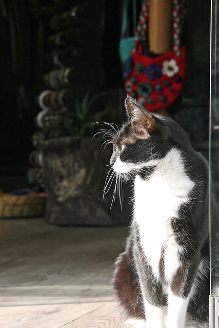 A cat in Istanbul, Turkey イスタンブールのネコ