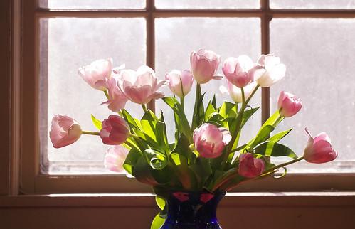 [フリー画像素材] 花・植物, チューリップ ID:201304031200