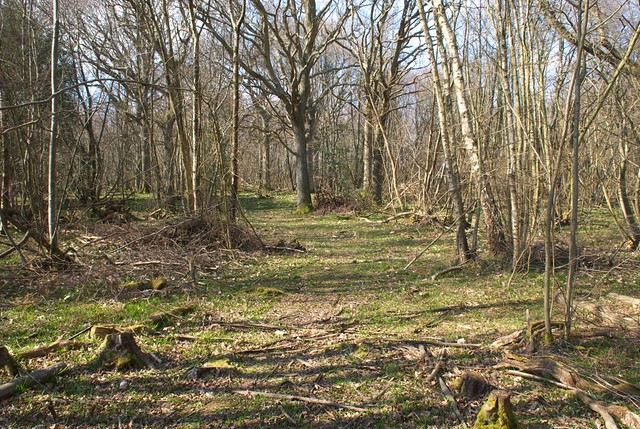 DSC_6097 Woodland in Spring