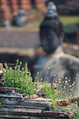 聽,說  ~Ayutthaya 大城,Wat Phra Mahathat~