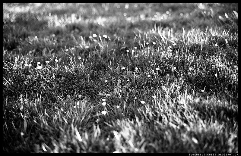 Colorless grass field