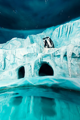 ocean(0.0), wave(0.0), ice cave(1.0), glacial landform(1.0), ice(1.0), sea ice(1.0), blue(1.0), iceberg(1.0),