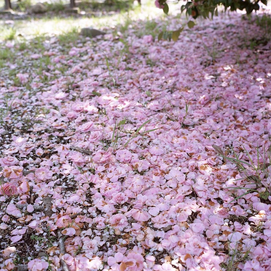 Carpet of pink