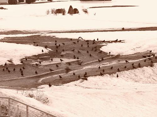 birds-in-winter