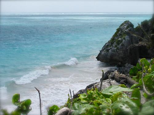 La iguana y el Mar Caribe