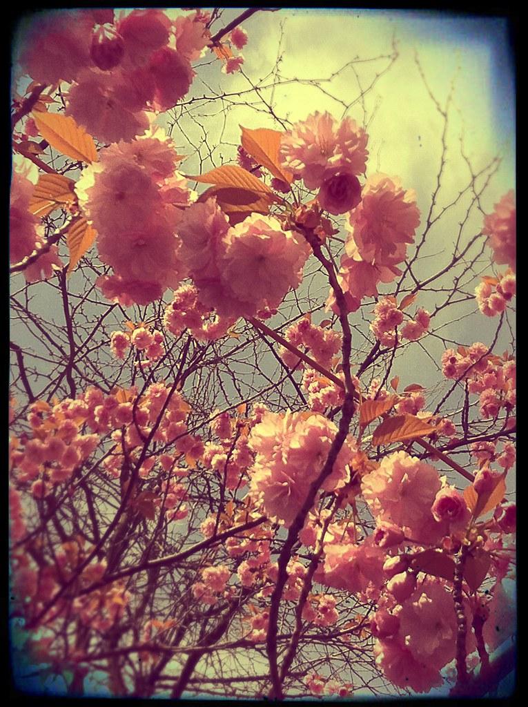 blümchen in rosa