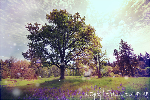 Springtime at Canemah Bluff (retrofied)