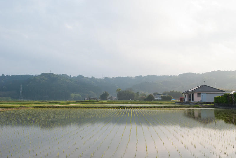 水田paddy field