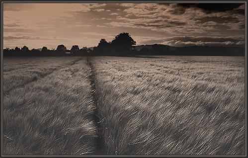 sky barley canon garden landscape split tone