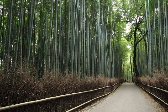 Path of the Bamboos
