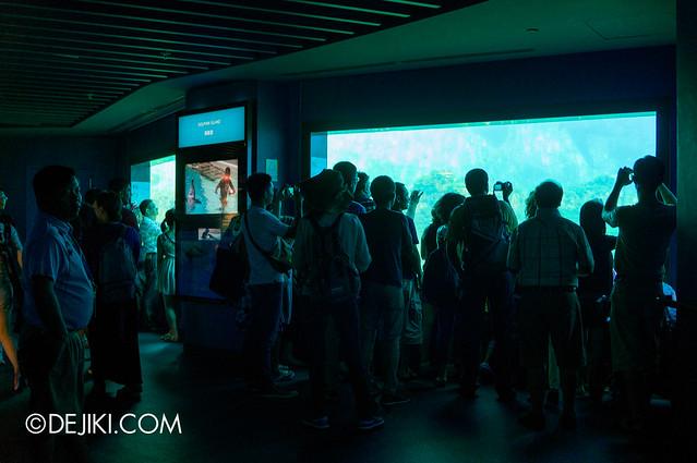 Marine Life Park Singapore - S.E.A. Aquarium - dolphin island gallery