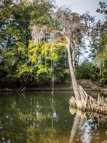 Savannah River from Stokes Bluff with LCU Nov 7, 2014, 4-18 PM Nov 8, 2014, 8-45 AM