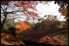 日本京都[高雄]-神護寺.39