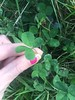 Feeling a bit stressed with a lot of work on at the moment so it was joyful to find a few four leaf clovers :four_leaf_clover: