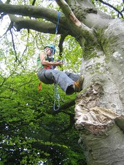 Helen swinging about in a tree Image