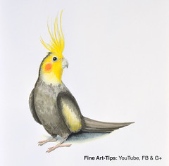 How to Draw a Cockatiel - With Winsor & Newton Pigment Markers