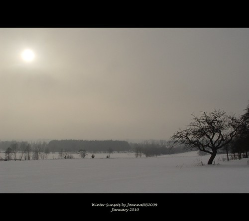 trees winter sunset sky sun white snow cold nature landscape countryside poland polska