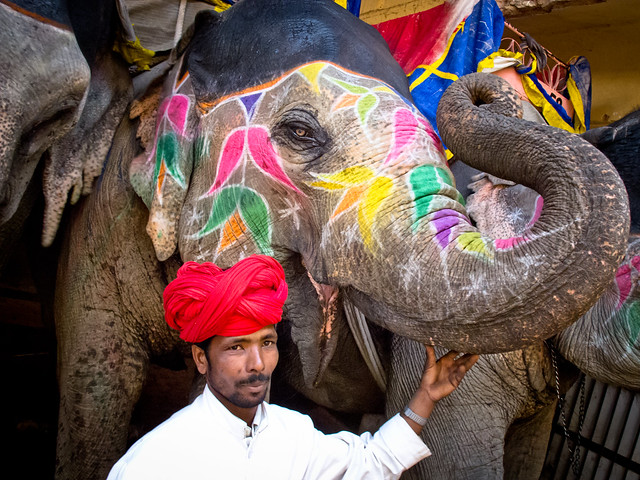 Jaipur-101