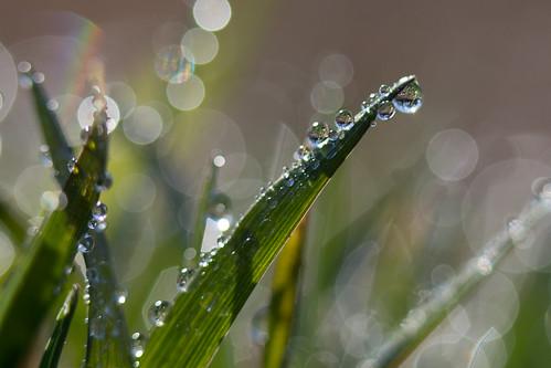 flower macro grass sunrise drop petal dewdrop dew blade jasonmk