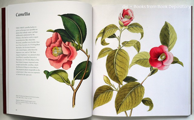 The Golden Age of Flowers  By Celia Fisher