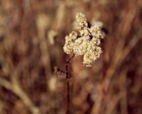 Vestamager Flowers
