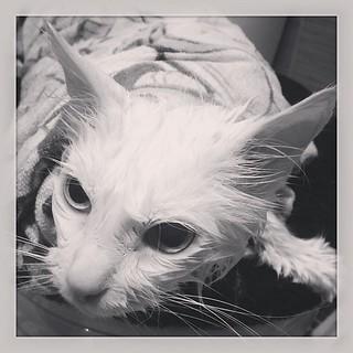 От нас незаметно сбежал кот)) вернулся грязный как черт, наконецто нашелся повод помыться