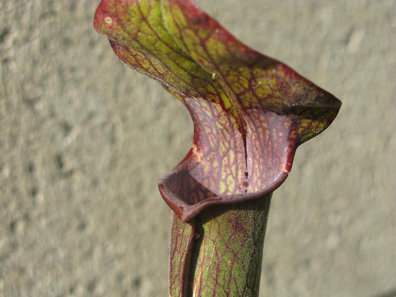 Davis Plants 1181